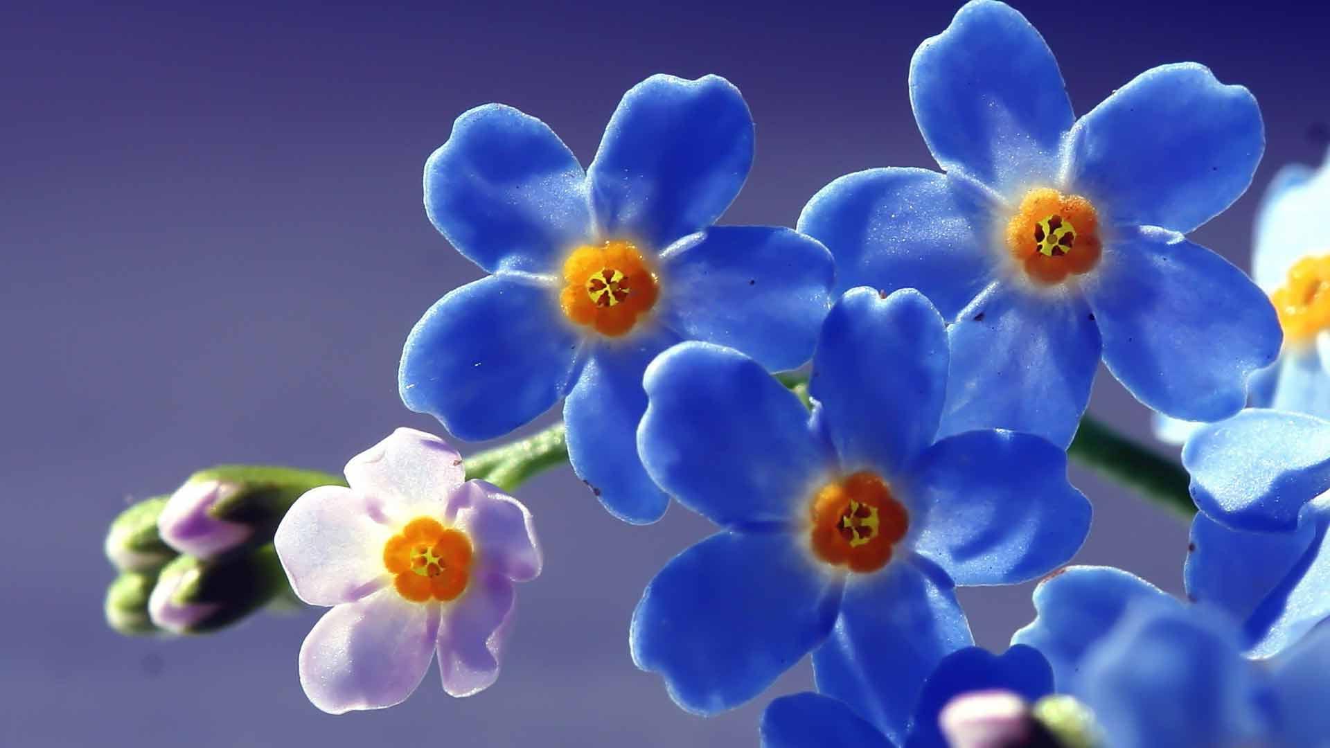 По каким причинам, почему калла стала известна, как цветок смерти 92