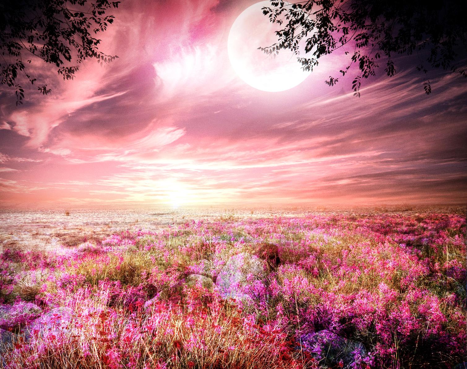 розовые и нежные пейзажи фото